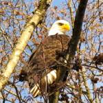 Eagle2011-2
